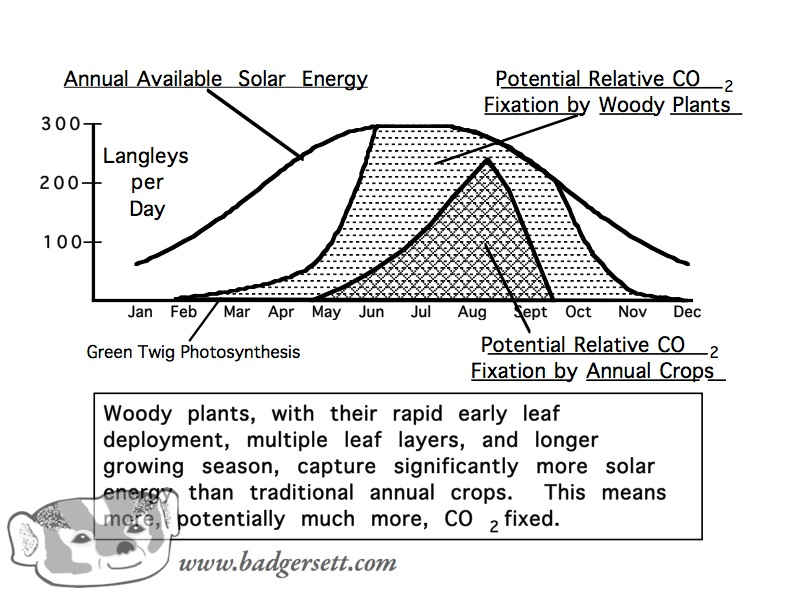 Woody perennials capture much more sunlight than annuals.
